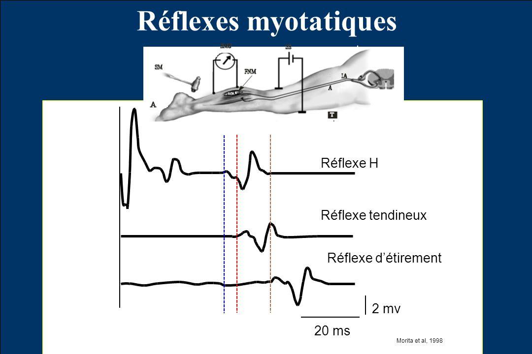 Réflexes myotatiques Réflexe H Réflexe tendineux Réflexe détirement 20 ms 2 mv Morita et al, 1998