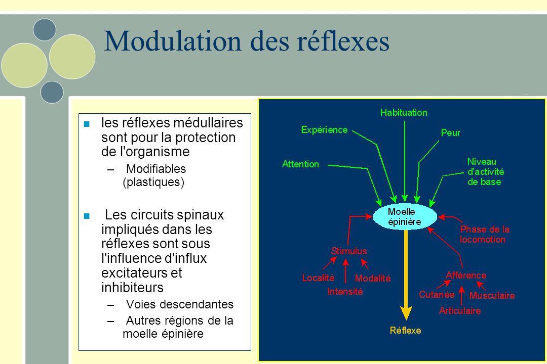 Modulation des réflexes n les réflexes médullaires sont pour la protection de l'organisme – Modifiables (plastiques) n Les circuits spinaux impliqués