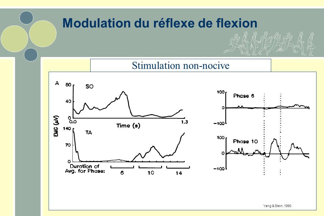 Modulation du réflexe de flexion Stimulation non-nocive Yang & Stein, 1990
