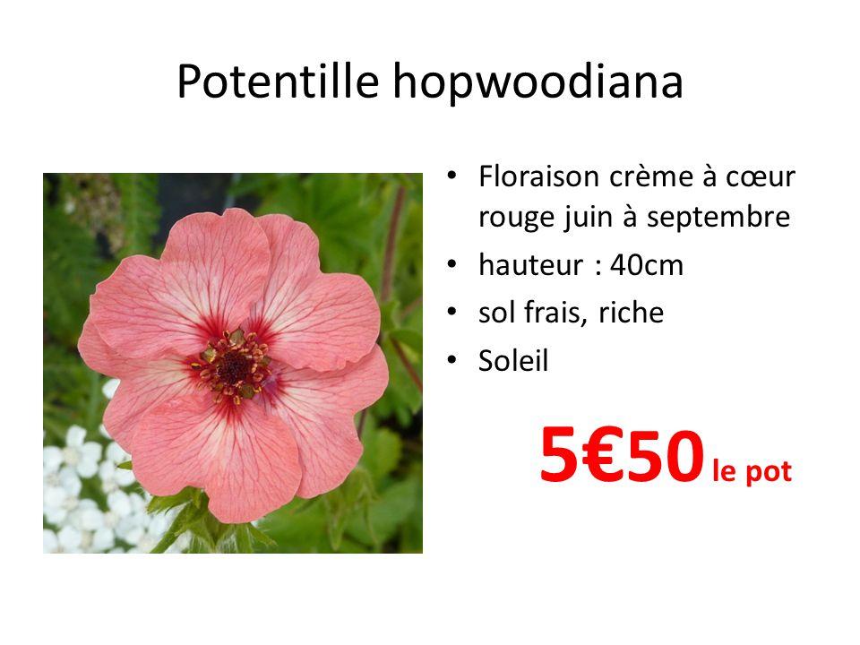 Potentille hopwoodiana Floraison crème à cœur rouge juin à septembre hauteur : 40cm sol frais, riche Soleil 5 50 le pot