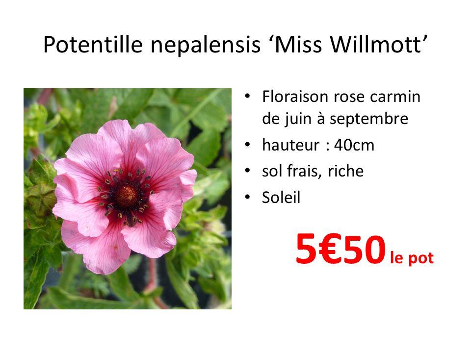 Potentille nepalensis Miss Willmott Floraison rose carmin de juin à septembre hauteur : 40cm sol frais, riche Soleil 5 50 le pot