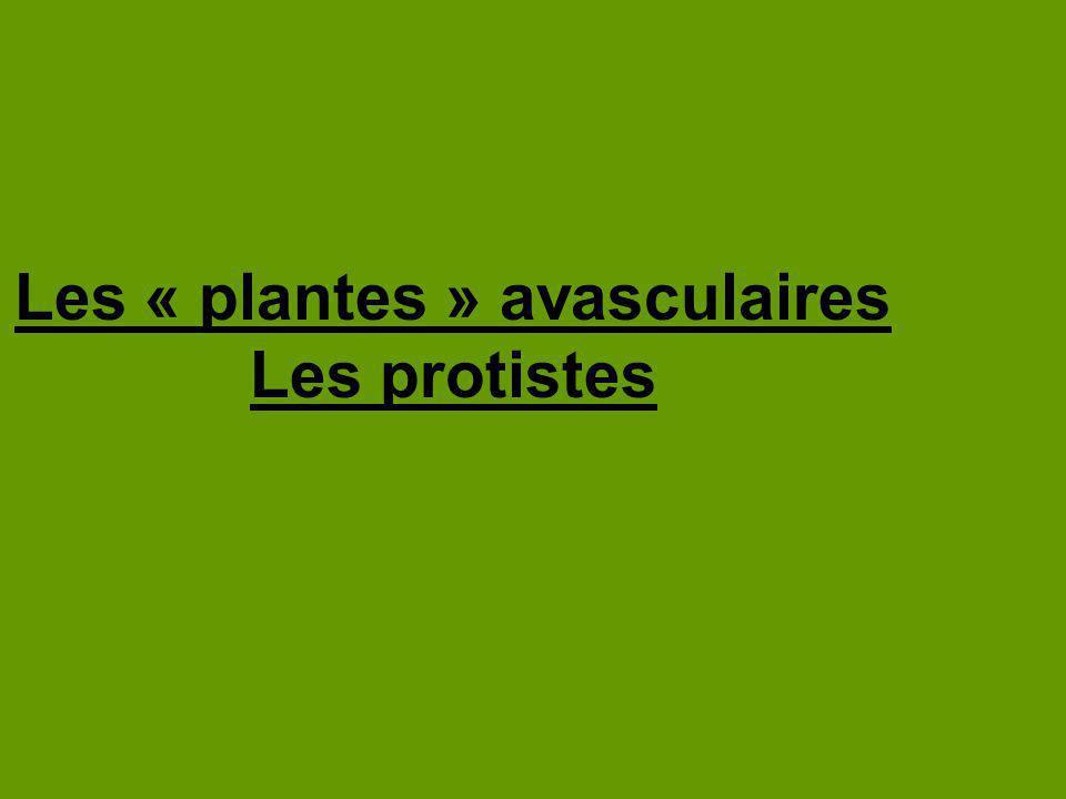 Les algues Les algues vertes, brunes et rouges sont parfois classifiées des protistes semblables à des plantes.