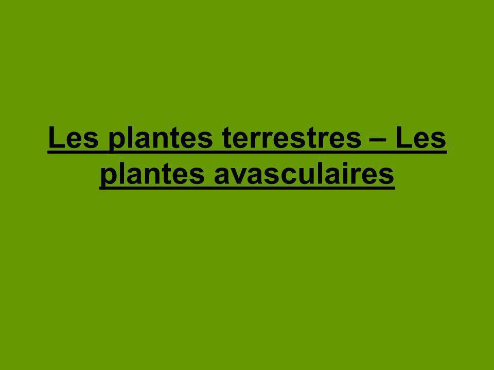 Les bryophytes Ex : Les mousses