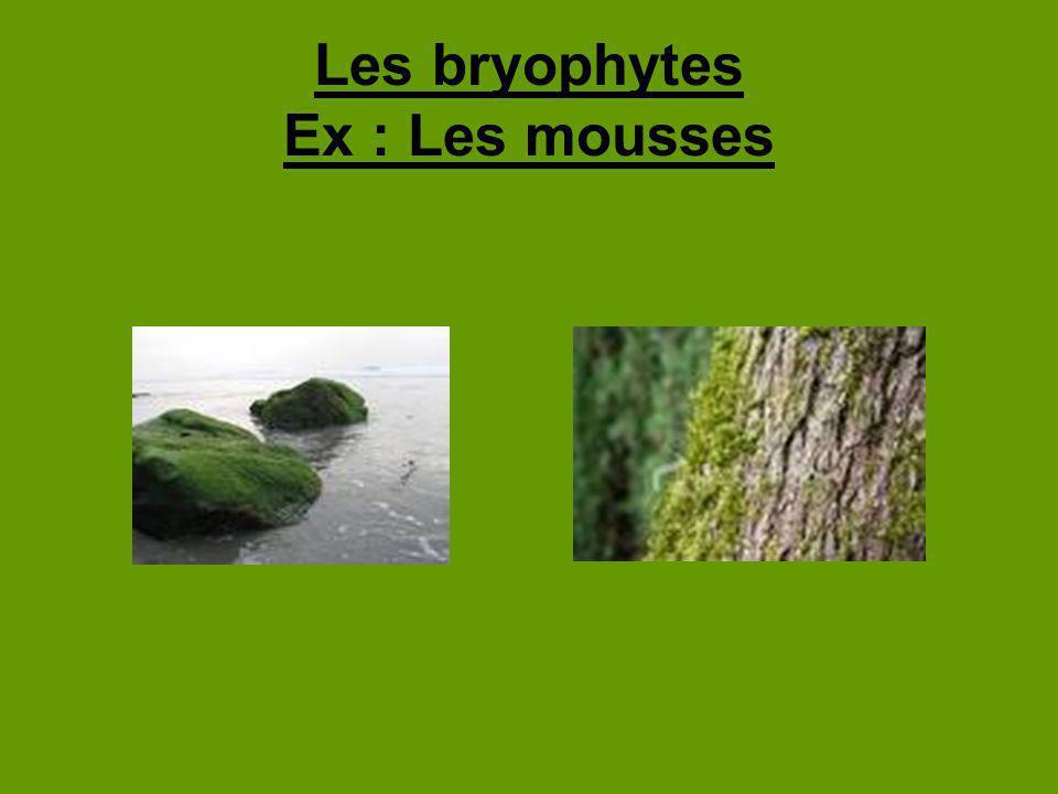 Identification terrestres, mais elles vivent très près de leau petites plantes basses qui poussent sur des surfaces humides ont des feuilles dune ou deux cellules dépaisseur