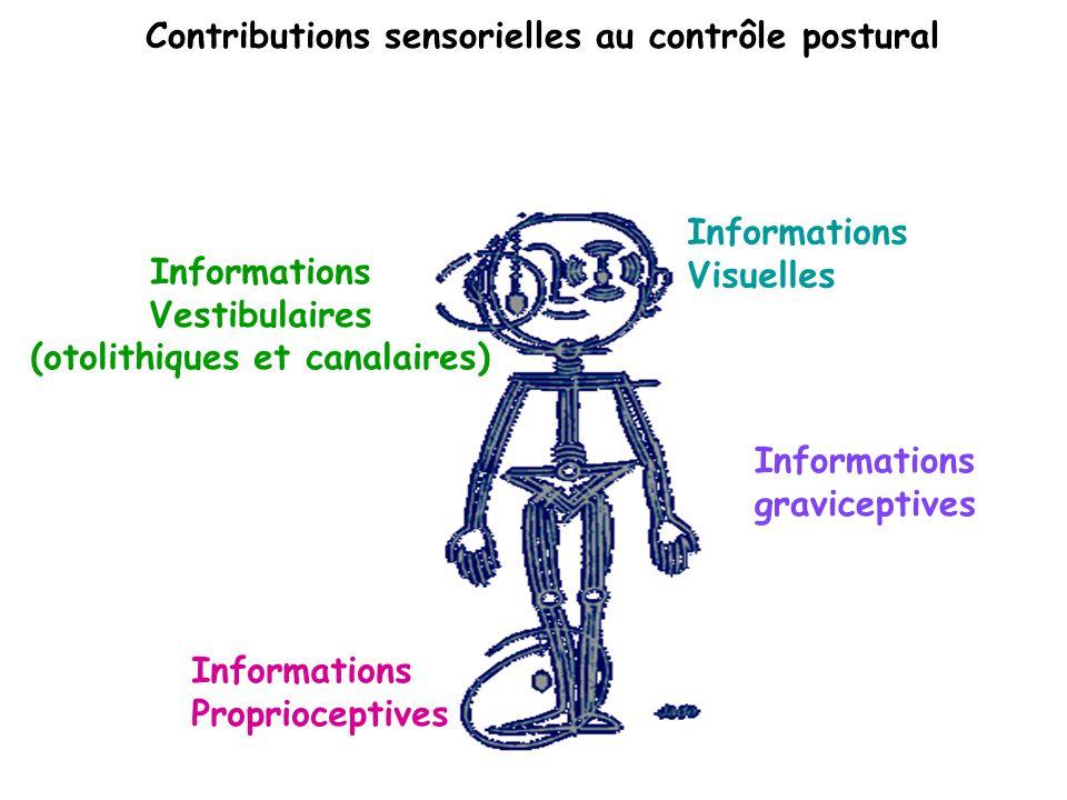 Contributions sensorielles au contrôle postural Informations Proprioceptives Informations Visuelles Informations Vestibulaires (otolithiques et canala