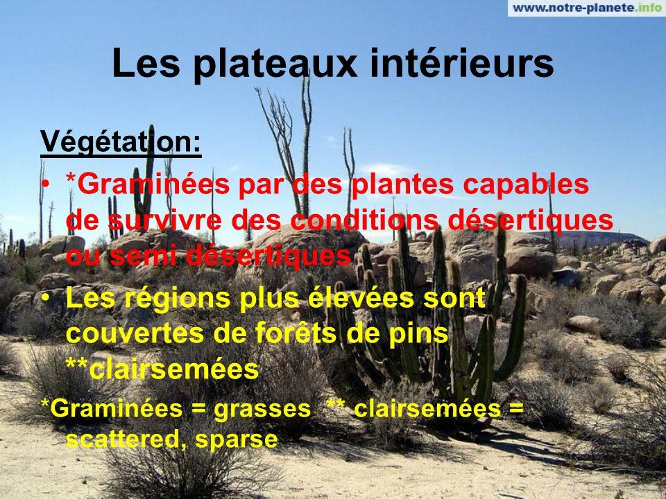 Les plateaux intérieurs Climat: Influencé par laltitude Les hivers peuvent être frais et humides ou chauds et secs Influencé par lombre de la pluie (versants protégés des montagnes)