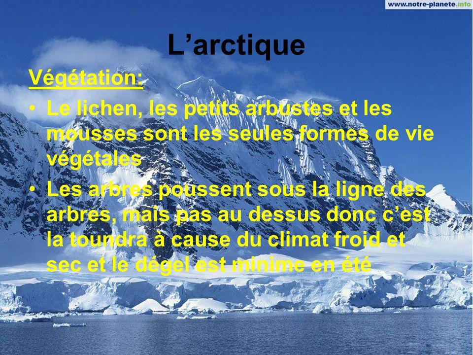 Larctique Climat: Très rigoureux et très loin de léquateur Les hivers durent dix mois Lété est très court et pas très chaud Larctique est un désert, p