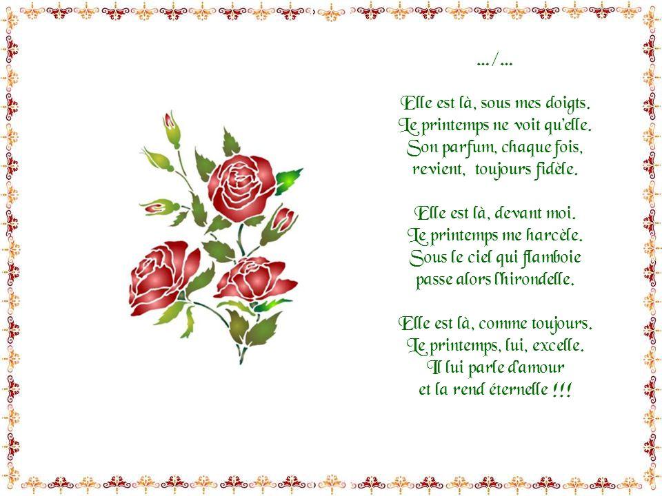 Elle est là, la rose ! Elle est là, devant moi… Le printemps étincelle, et sa pourpre en émoi est douceur éternelle. Elle est là, que pour moi ! Le pr