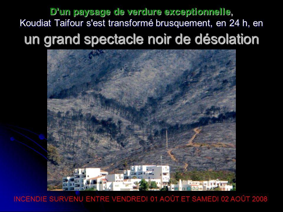 D un paysage de verdure exceptionnelle, Koudiat Taifour s est transformé brusquement, en 24 h, en un grand spectacle noir de désolation INCENDIE SURVENU ENTRE VENDREDI 01 AOÛT ET SAMEDI 02 AOÛT 2008