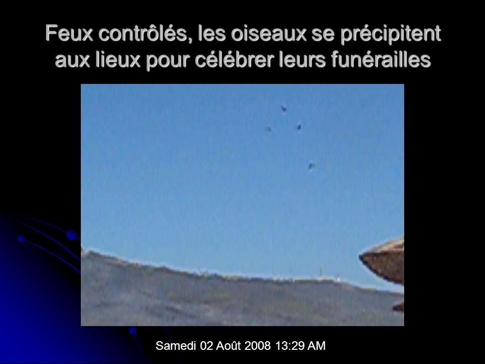 Feux contrôlés, les oiseaux se précipitent aux lieux pour célébrer leurs funérailles Samedi 02 Août 2008 13:29 AM