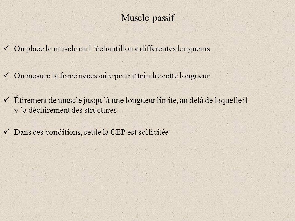 Muscle passif On place le muscle ou l échantillon à différentes longueurs On mesure la force nécessaire pour atteindre cette longueur Dans ces conditi