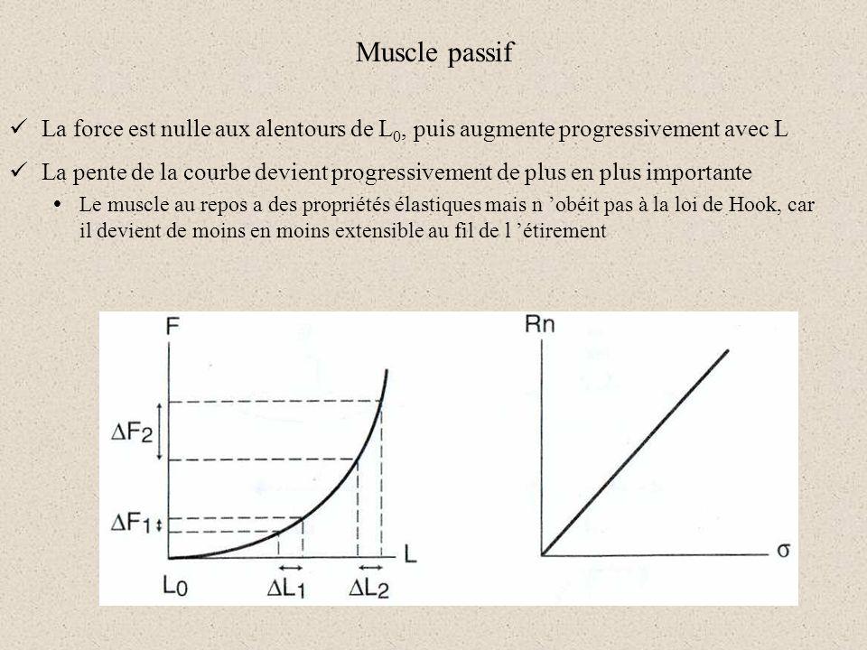 Muscle passif La force est nulle aux alentours de L 0, puis augmente progressivement avec L La pente de la courbe devient progressivement de plus en p