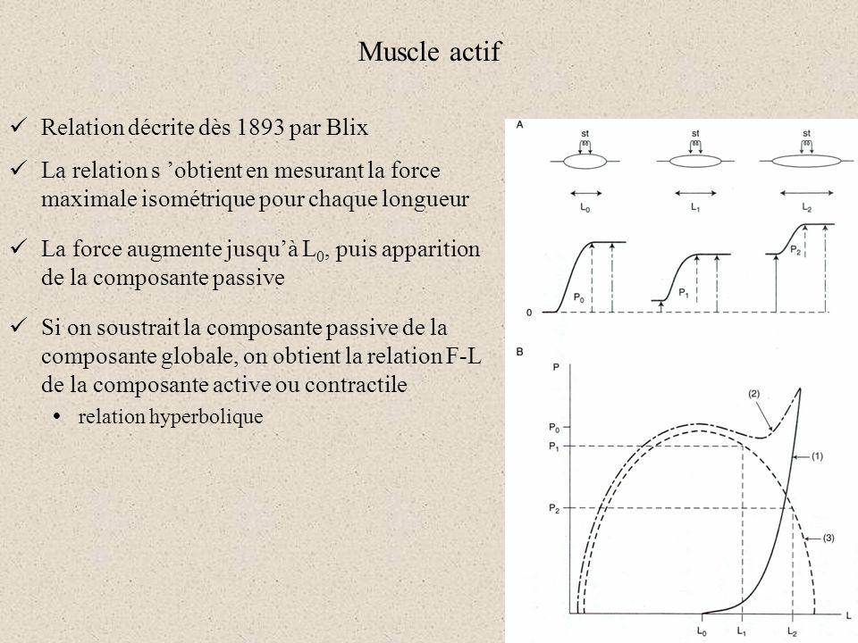 Muscle actif Relation décrite dès 1893 par Blix La relation s obtient en mesurant la force maximale isométrique pour chaque longueur La force augmente