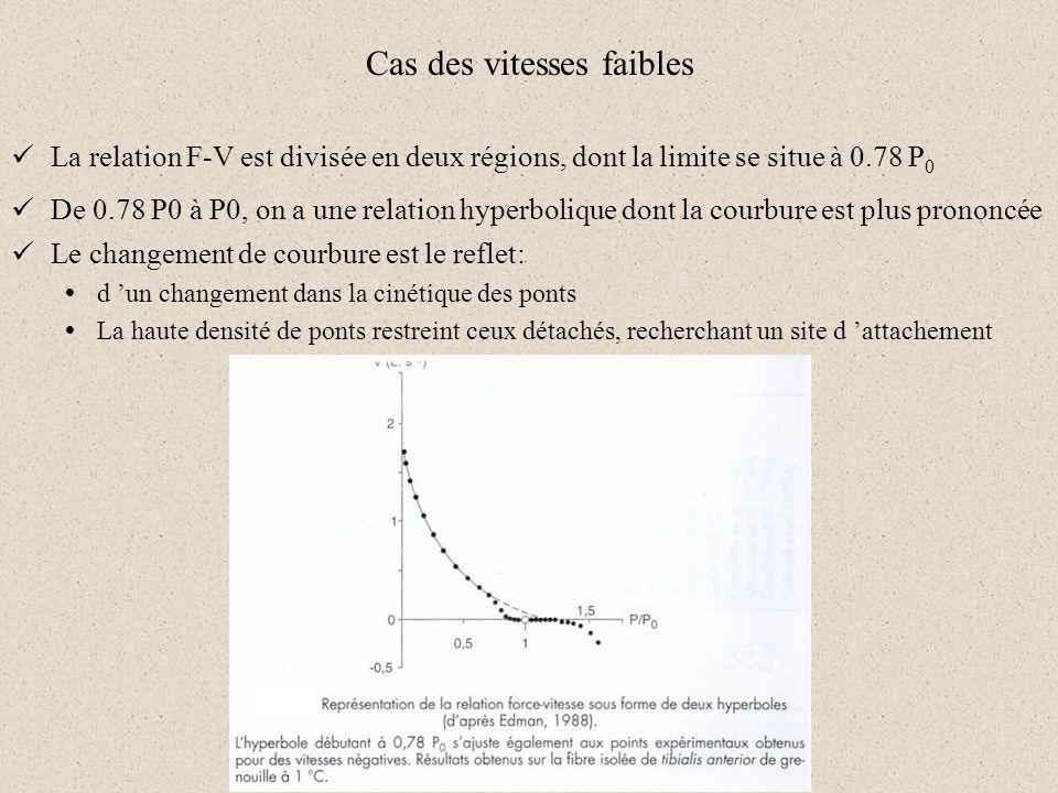 Cas des vitesses faibles La relation F-V est divisée en deux régions, dont la limite se situe à 0.78 P 0 De 0.78 P0 à P0, on a une relation hyperboliq