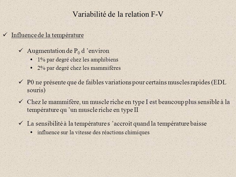 Variabilité de la relation F-V Influence de la température Augmentation de P 0 d environ 1% par degré chez les amphibiens 2% par degré chez les mammif