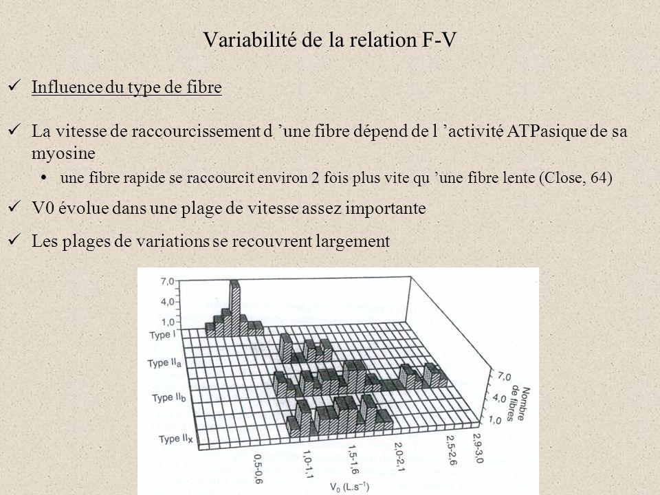 Variabilité de la relation F-V Influence du type de fibre La vitesse de raccourcissement d une fibre dépend de l activité ATPasique de sa myosine une