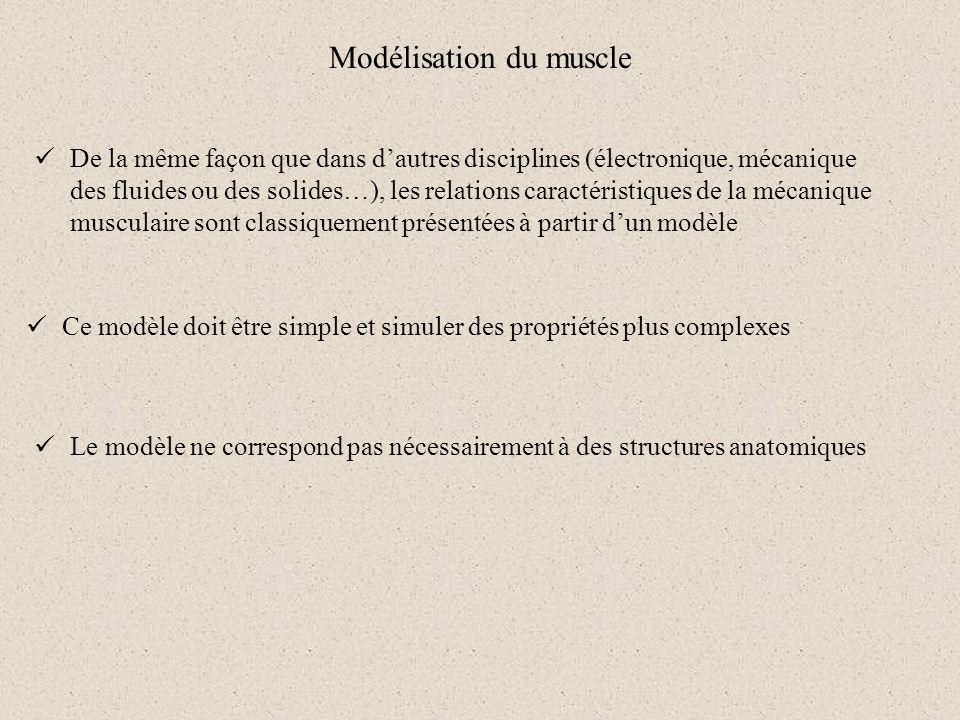 Modélisation du muscle De la même façon que dans dautres disciplines (électronique, mécanique des fluides ou des solides…), les relations caractéristi