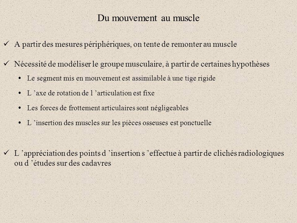 Du mouvement au muscle A partir des mesures périphériques, on tente de remonter au muscle Nécessité de modéliser le groupe musculaire, à partir de cer