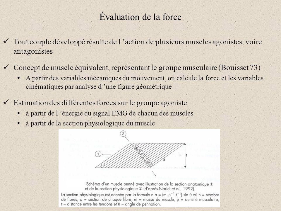 Évaluation de la force Tout couple développé résulte de l action de plusieurs muscles agonistes, voire antagonistes Concept de muscle équivalent, repr