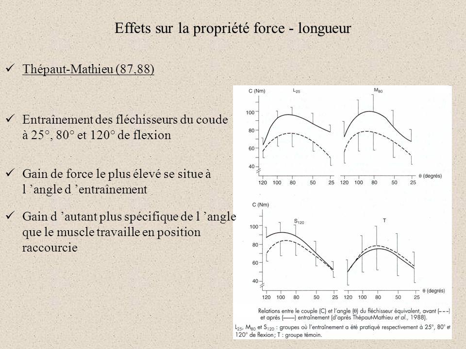 Effets sur la propriété force - longueur Thépaut-Mathieu (87,88) Entraînement des fléchisseurs du coude à 25°, 80° et 120° de flexion Gain de force le