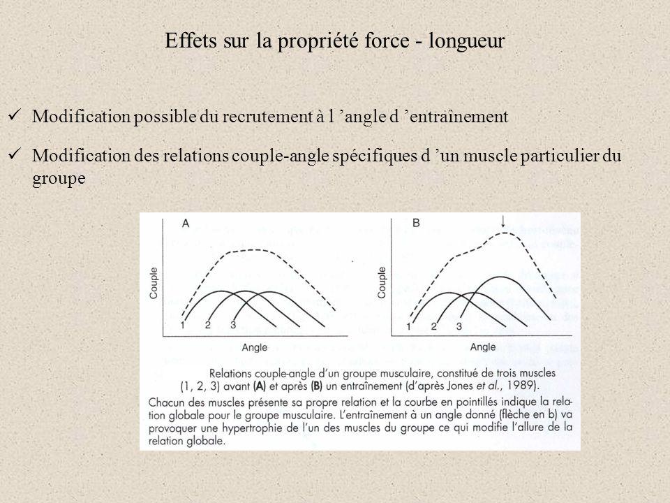 Effets sur la propriété force - longueur Modification possible du recrutement à l angle d entraînement Modification des relations couple-angle spécifi