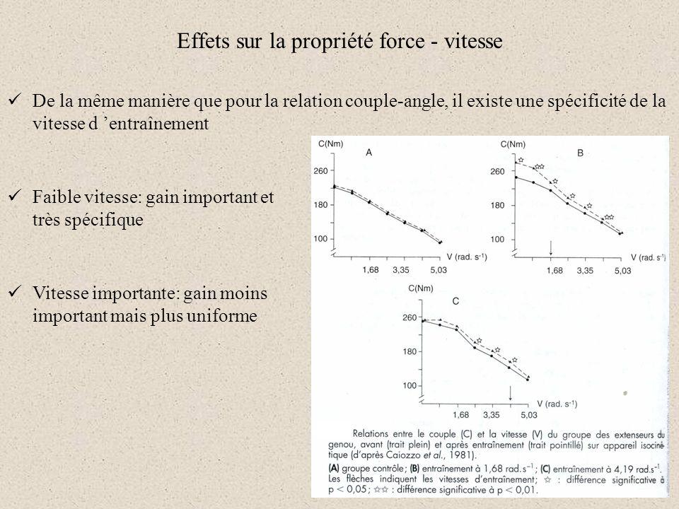 De la même manière que pour la relation couple-angle, il existe une spécificité de la vitesse d entraînement Effets sur la propriété force - vitesse F
