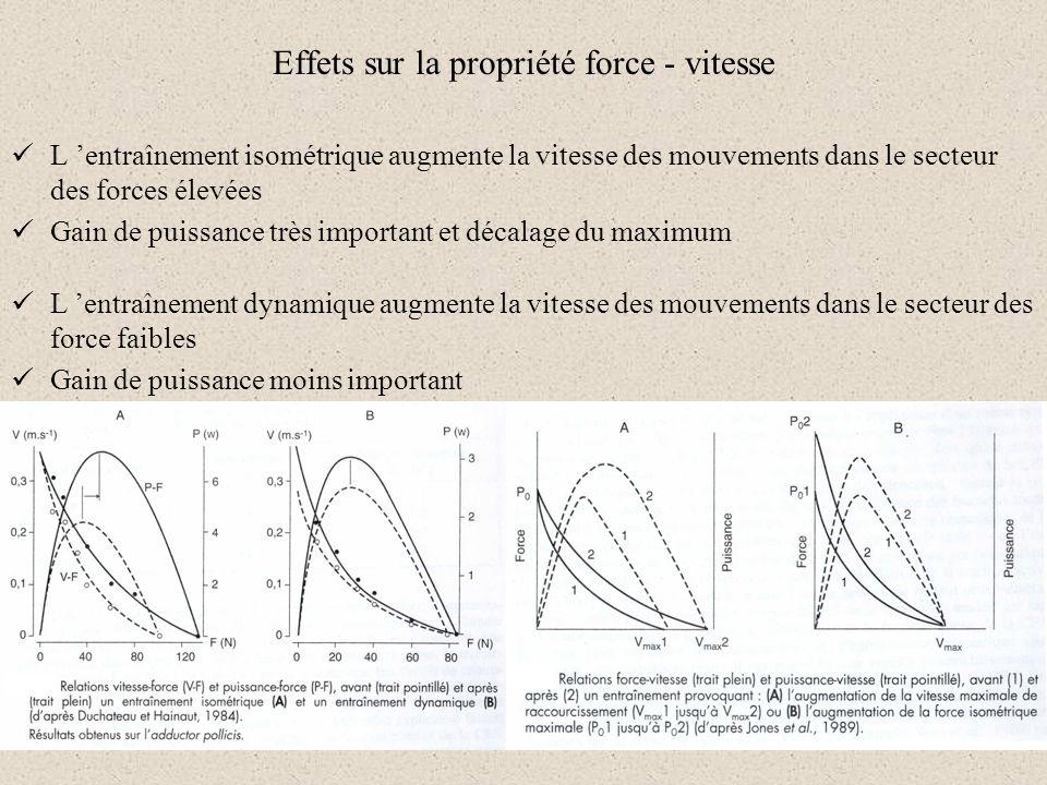 L entraînement isométrique augmente la vitesse des mouvements dans le secteur des forces élevées Gain de puissance très important et décalage du maxim