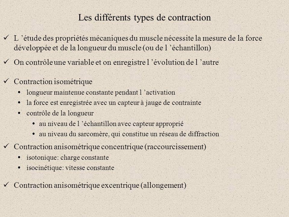 Les différents types de contraction L étude des propriétés mécaniques du muscle nécessite la mesure de la force développée et de la longueur du muscle