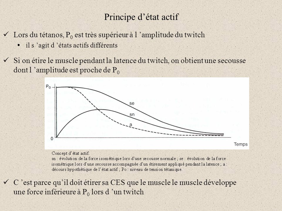 Principe détat actif Lors du tétanos, P 0 est très supérieur à l amplitude du twitch il s agit d états actifs différents Si on étire le muscle pendant
