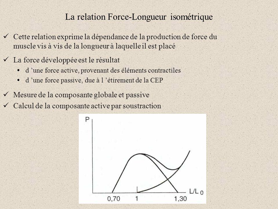 La relation Force-Longueur isométrique Cette relation exprime la dépendance de la production de force du muscle vis à vis de la longueur à laquelle il