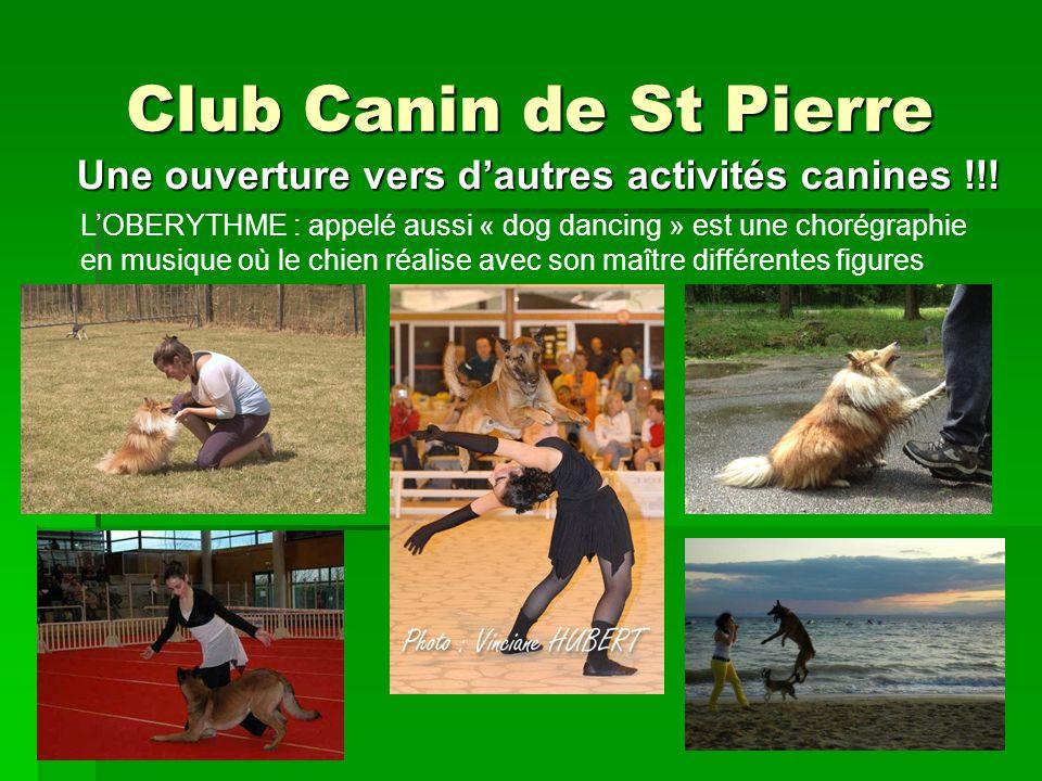 Club Canin de St Pierre LOBEISSANCE : Dans la continuité de léducation, le chien apprend des exercices encore plus précis pour se présenter en concours Une ouverture vers dautres activités canines !!.