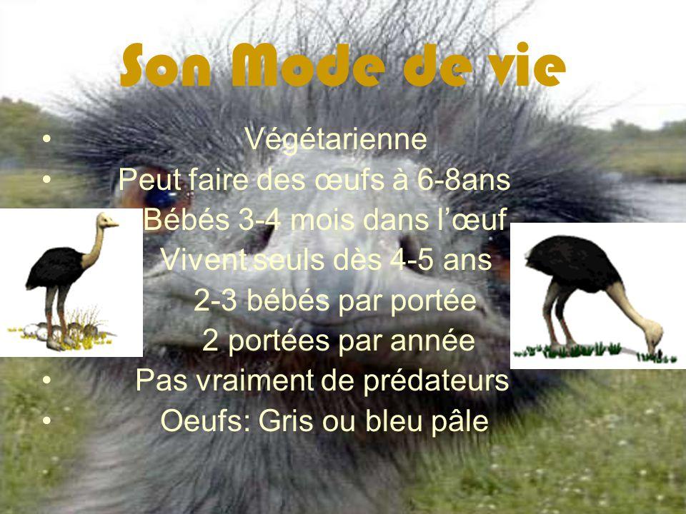 Son Mode de vie Végétarienne Peut faire des œufs à 6-8ans Bébés 3-4 mois dans lœuf Vivent seuls dès 4-5 ans 2-3 bébés par portée 2 portées par année P