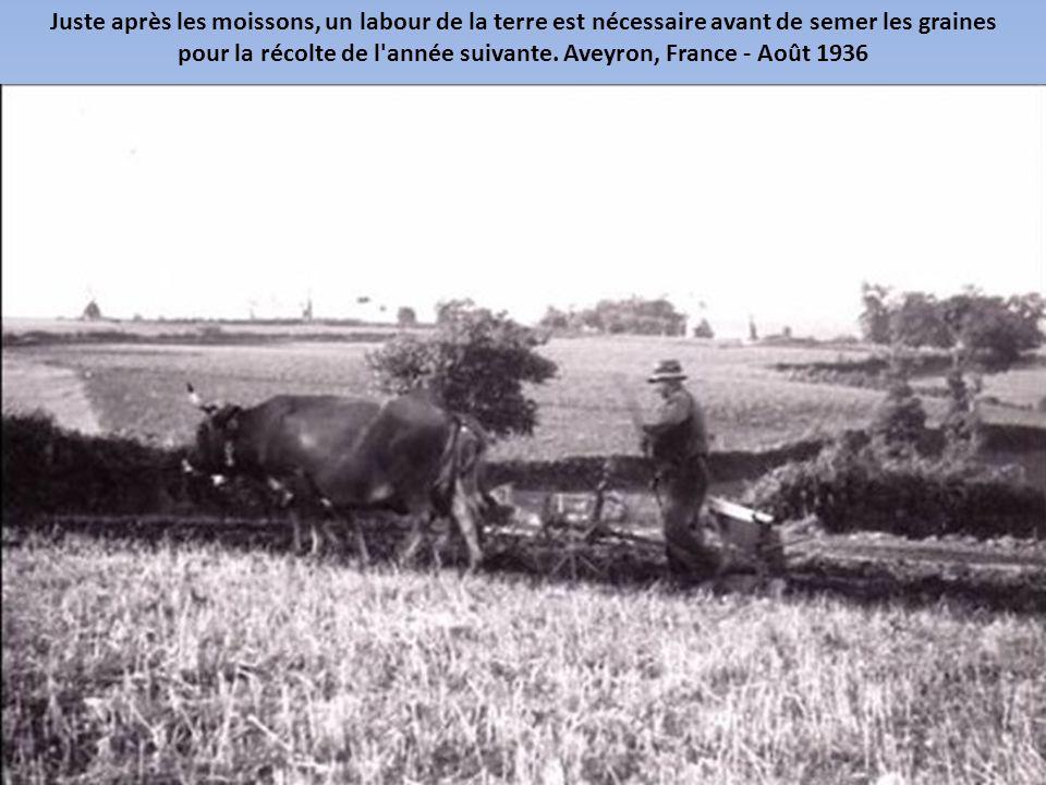 La première batteuse mobile française a été mise au point par Célestin Gérard en 1866. Chateaurenard, Loiret - Août 1935