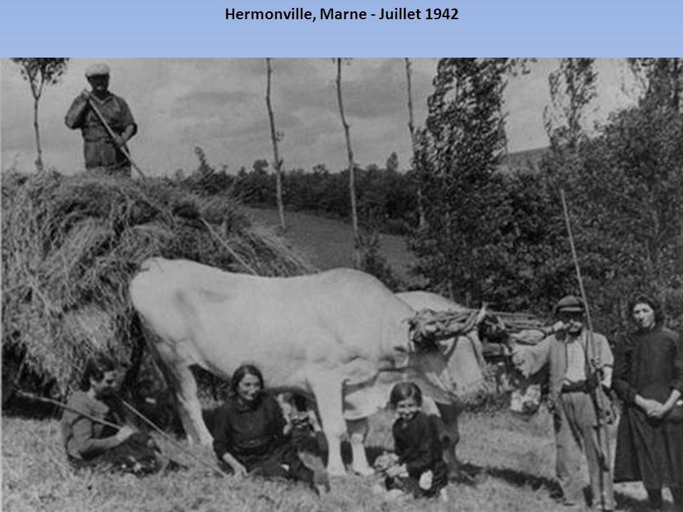 Le ramassage de la paille se faisait lui aussi à la main. Oise, France - Août 1937
