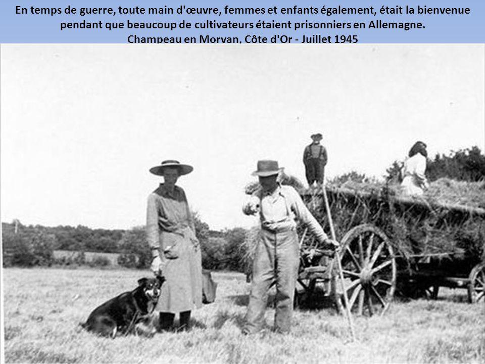 Avant que les batteuses mécaniques existent, le battage du blé pouvait être fait à la main ou à l'aide d'animaux. Cette opération s'appelait aussi le
