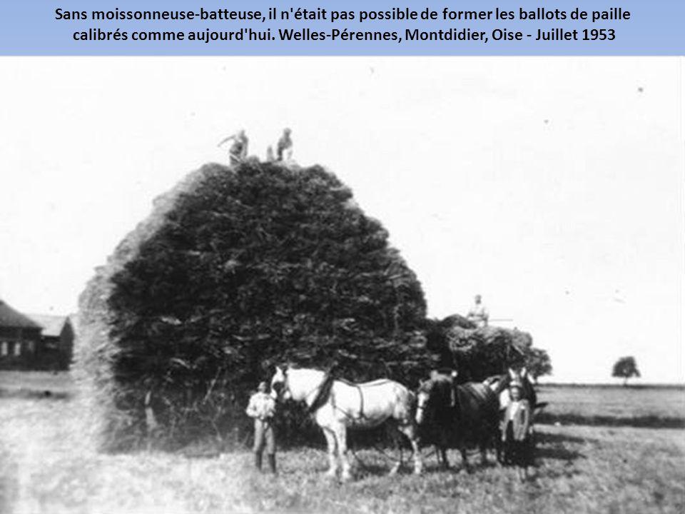Les moissonneuses-lieuses permettaient de faucher les céréales et de lier les gerbes. Welles-Pérennes, Montdidier, Oise - Juillet 1953
