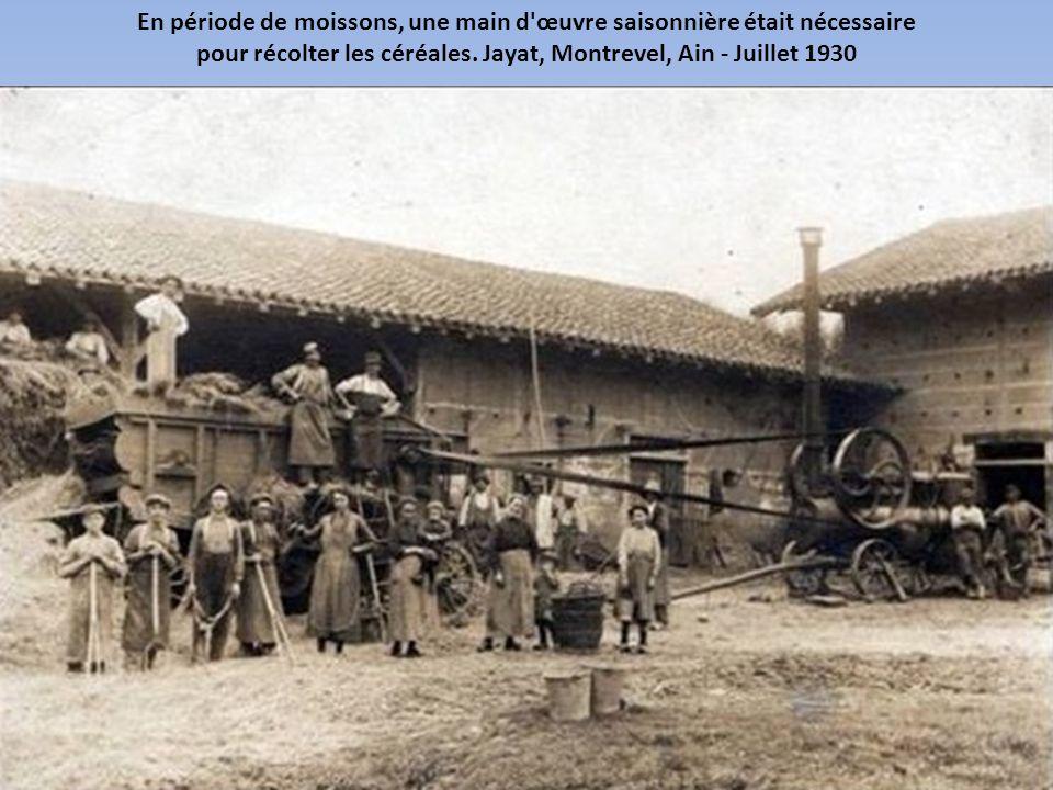 Les locomobiles à vapeur entraînaient les batteuses avec de très longues courroies. Corrèze, France - Juillet 1927