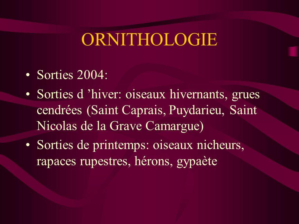 ORNITHOLOGIE Sorties 2004: Sorties d hiver: oiseaux hivernants, grues cendrées (Saint Caprais, Puydarieu, Saint Nicolas de la Grave Camargue) Sorties