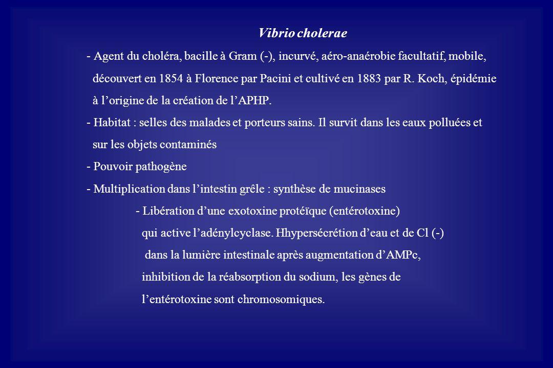 Vibrio cholerae - Agent du choléra, bacille à Gram (-), incurvé, aéro-anaérobie facultatif, mobile, découvert en 1854 à Florence par Pacini et cultivé