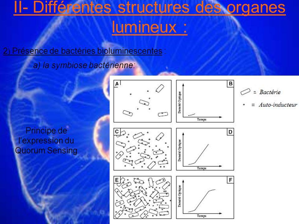 II- Différentes structures des organes lumineux : 2 ) Présence de bactéries bioluminescentes : a) la symbiose bactérienne: Principe de lexpression du Quorum Sensing