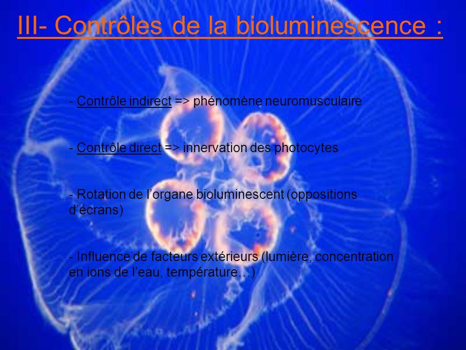 III- Contrôles de la bioluminescence : - Contrôle indirect => phénomène neuromusculaire - Contrôle direct => innervation des photocytes - Rotation de lorgane bioluminescent (oppositions décrans) - Influence de facteurs extérieurs (lumière, concentration en ions de leau, température…)
