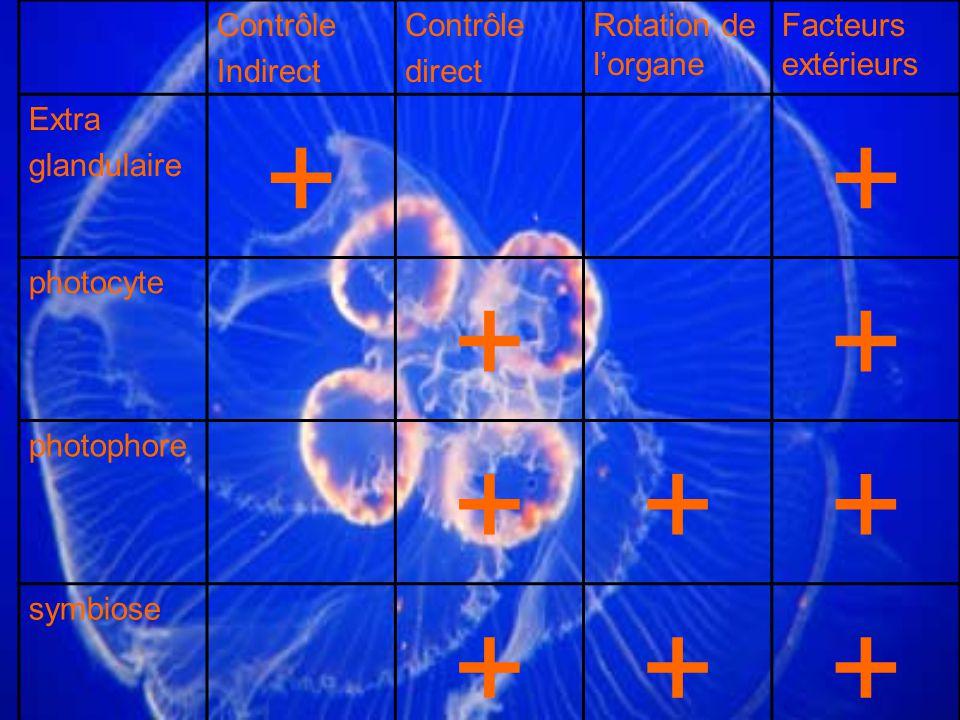 Contrôle Indirect Contrôle direct Rotation de lorgane Facteurs extérieurs Extra glandulaire ++ photocyte ++ photophore +++ symbiose +++