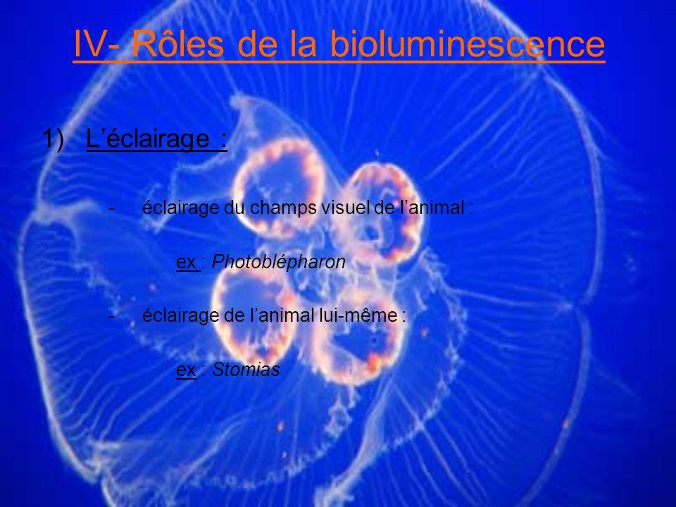 IV- Rôles de la bioluminescence 1)Léclairage : -éclairage du champs visuel de lanimal : ex : Photoblépharon -éclairage de lanimal lui-même : ex : Stomias