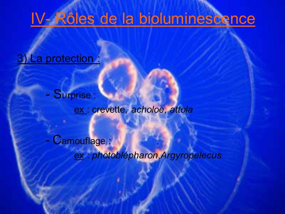 IV- Rôles de la bioluminescence 3) La protection : - S urprise : ex : crevette, acholoe, attola - C amouflage : ex : photoblépharon,Argyropelecus
