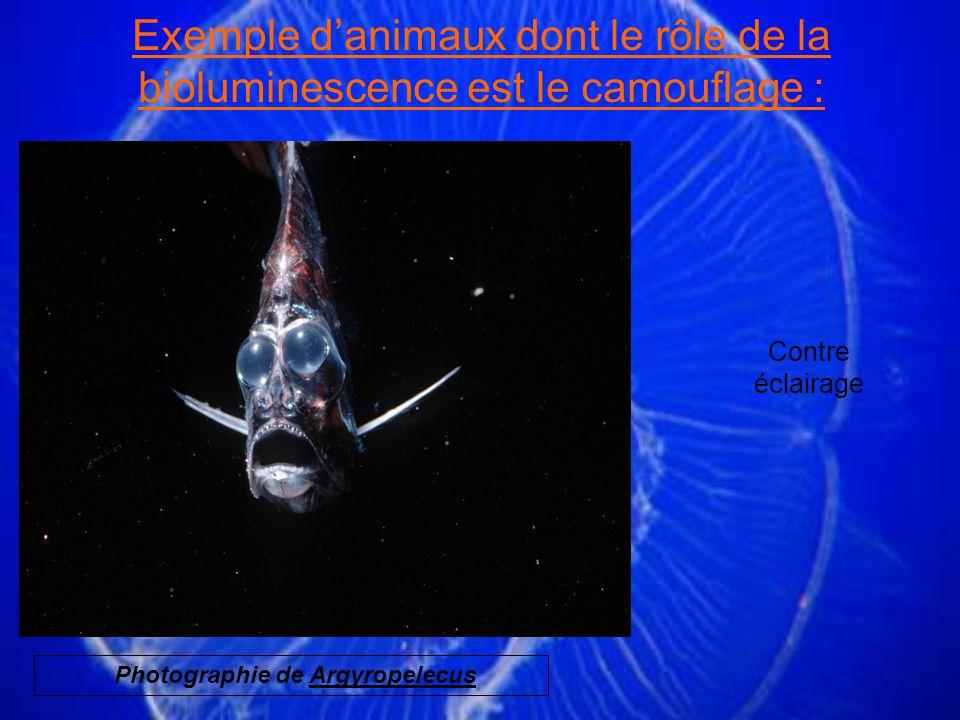 Contre éclairage Exemple danimaux dont le rôle de la bioluminescence est le camouflage : Photographie de Argyropelecus