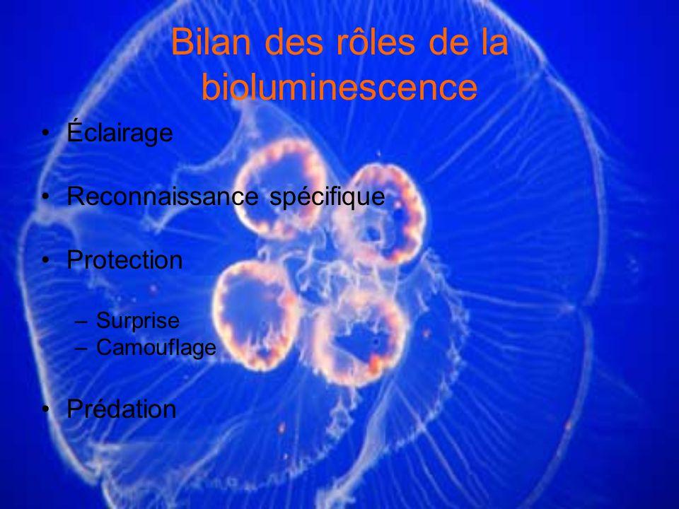 Bilan des rôles de la bioluminescence Éclairage Reconnaissance spécifique Protection –Surprise –Camouflage Prédation