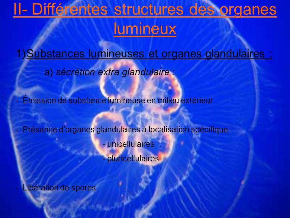 1)Substances lumineuses et organes glandulaires : a) sécrétion extra glandulaire : - Émission de substance lumineuse en milieu extérieur - Présence dorganes glandulaires à localisation spécifique: - unicellulaires - pluricellulaires - Libération de spores II- Différentes structures des organes lumineux