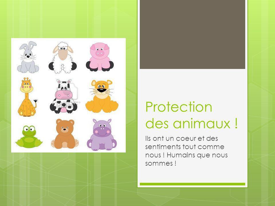 Protection des animaux .Ils ont un coeur et des sentiments tout comme nous .