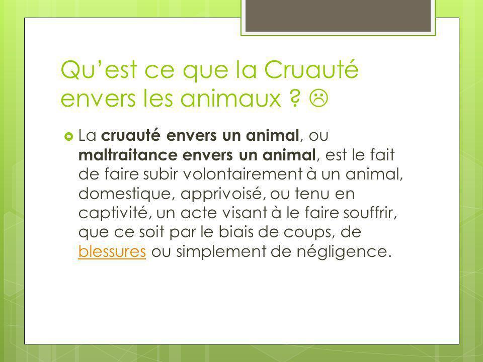 Quest ce que la Cruauté envers les animaux ? La cruauté envers un animal, ou maltraitance envers un animal, est le fait de faire subir volontairement
