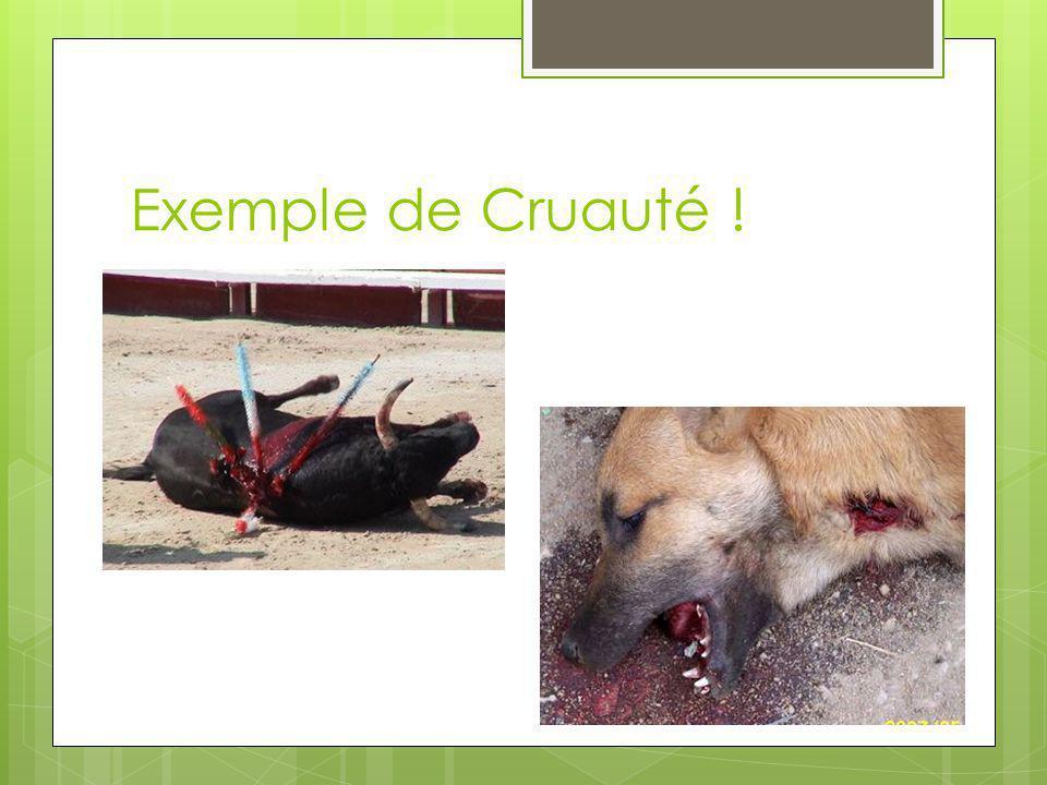 Exemple de Cruauté !